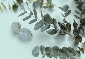 Eucalyptus Custom Scene Creator Template 4 Image04