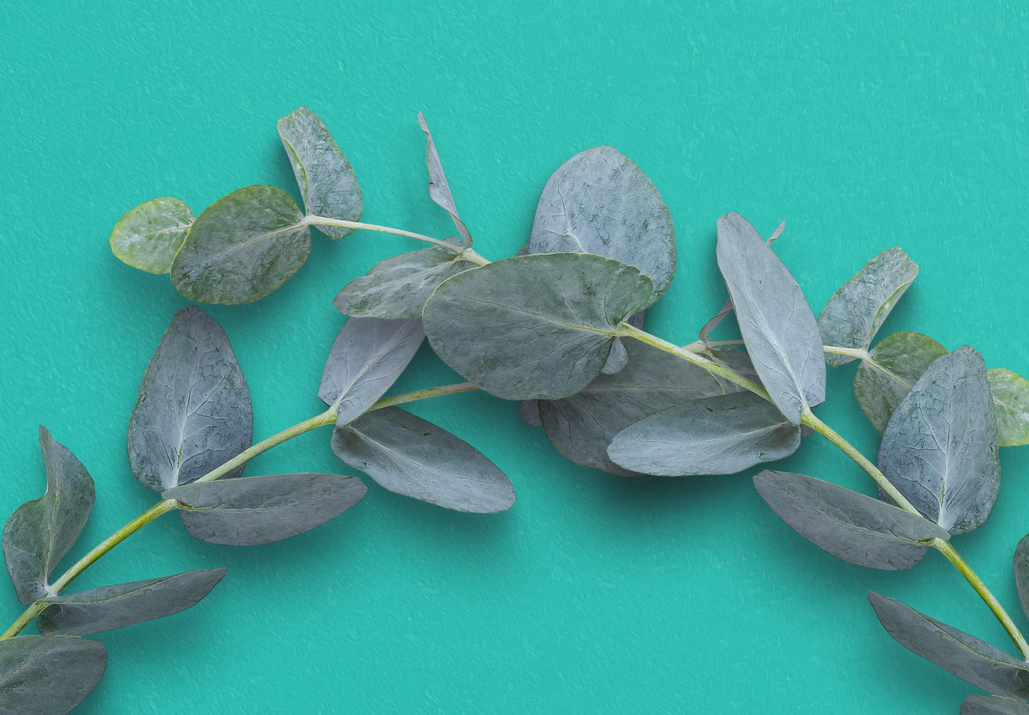 Eucalyptus Custom Scene Creator Template 5 Image04