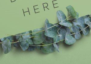 Eucalyptus Custom Scene Creator Template 6 Image04
