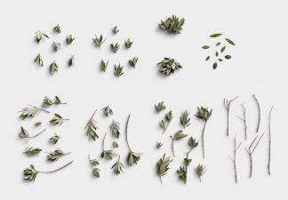 Olive Tree 01 Item Scene Creator