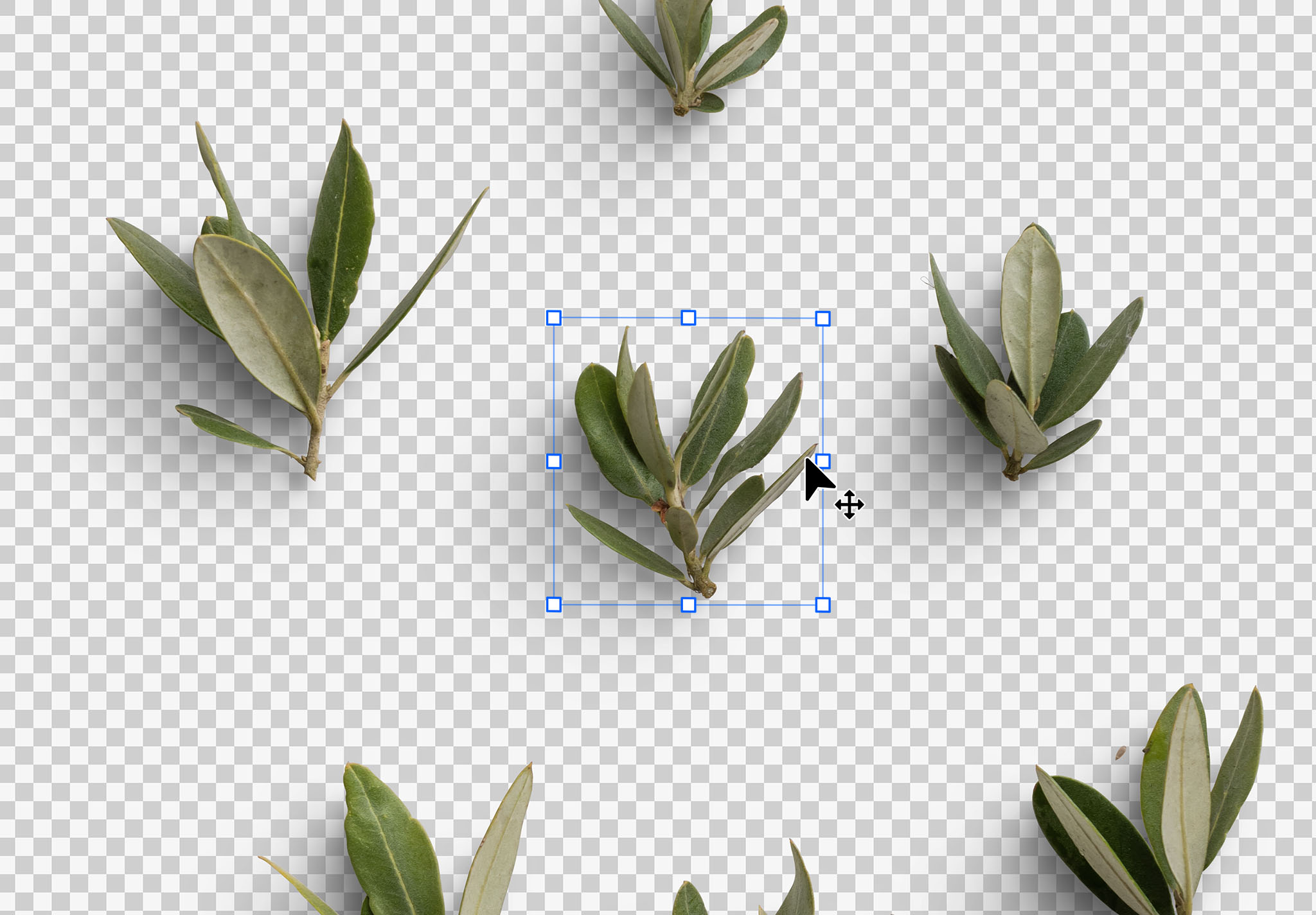 Olive Tree Isolated Objects