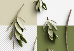 Olive Tree Isolated Objects 2
