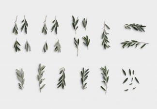 Olive Tree 2 01 Item Scene Creator