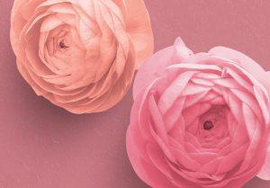 Ranunculus Custom Scene Creator Template 5 Image04