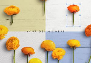 Ranunculus Custom Scene Creator Template 7 Image02