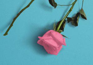 Roses Custom Scene Creator Template 1 Image04