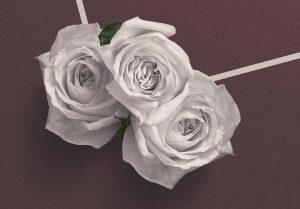 Roses Custom Scene Creator Template 4 Image04
