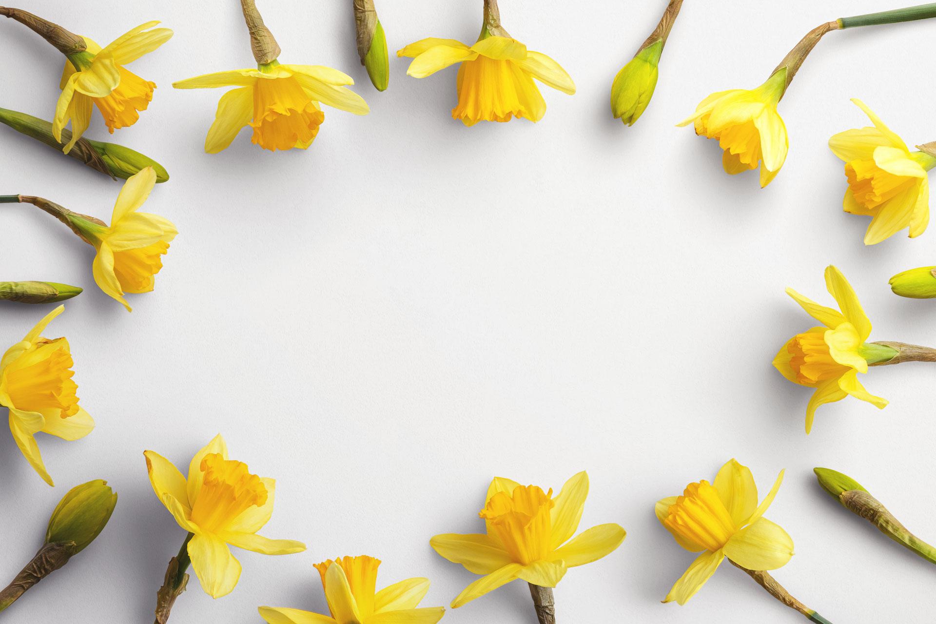 daffodils custom scene creator template 1 Thumbnail
