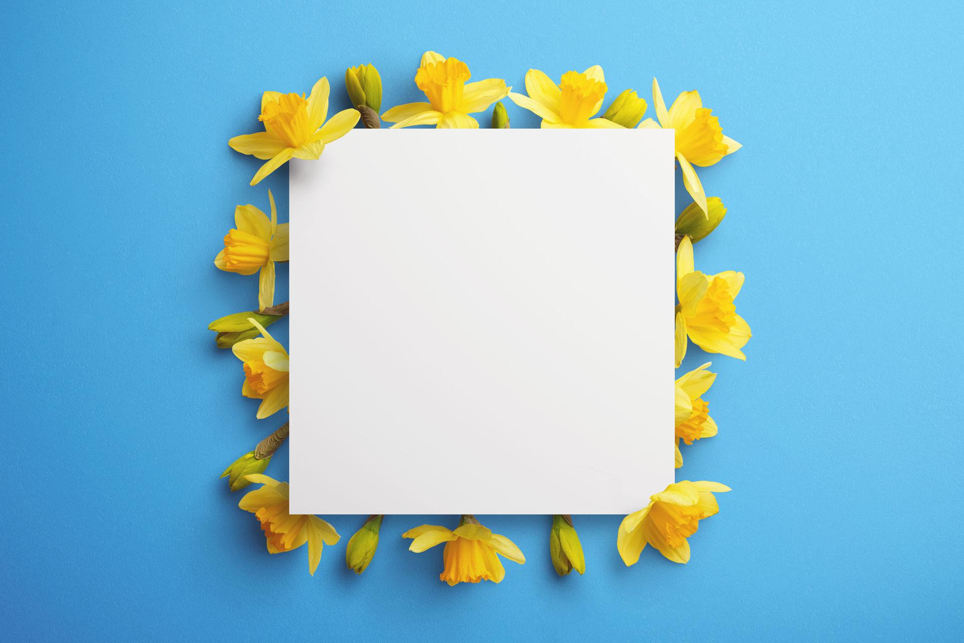 daffodils custom scene creator template 10 Thumbnail