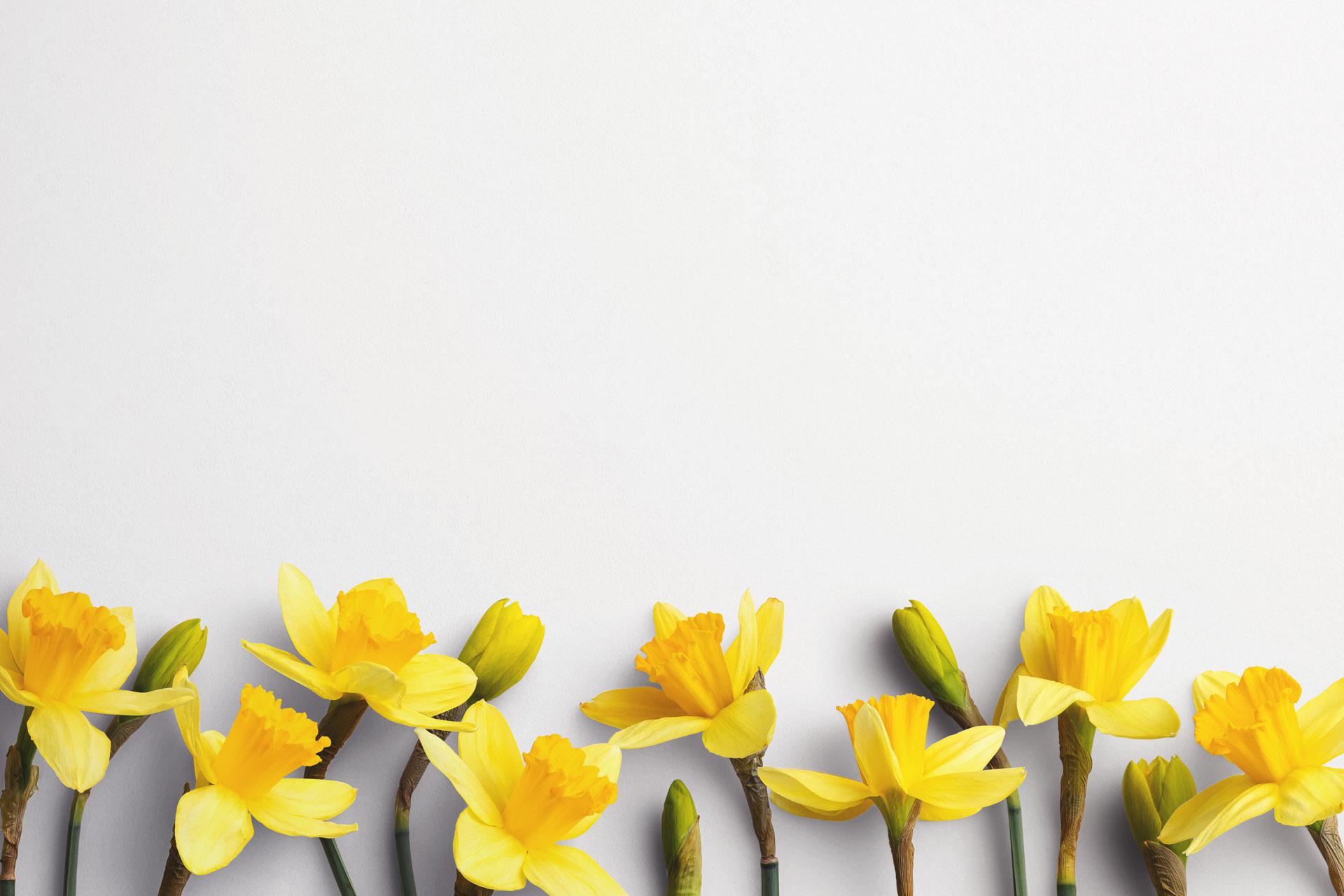 daffodils custom scene creator template 2 Thumbnail