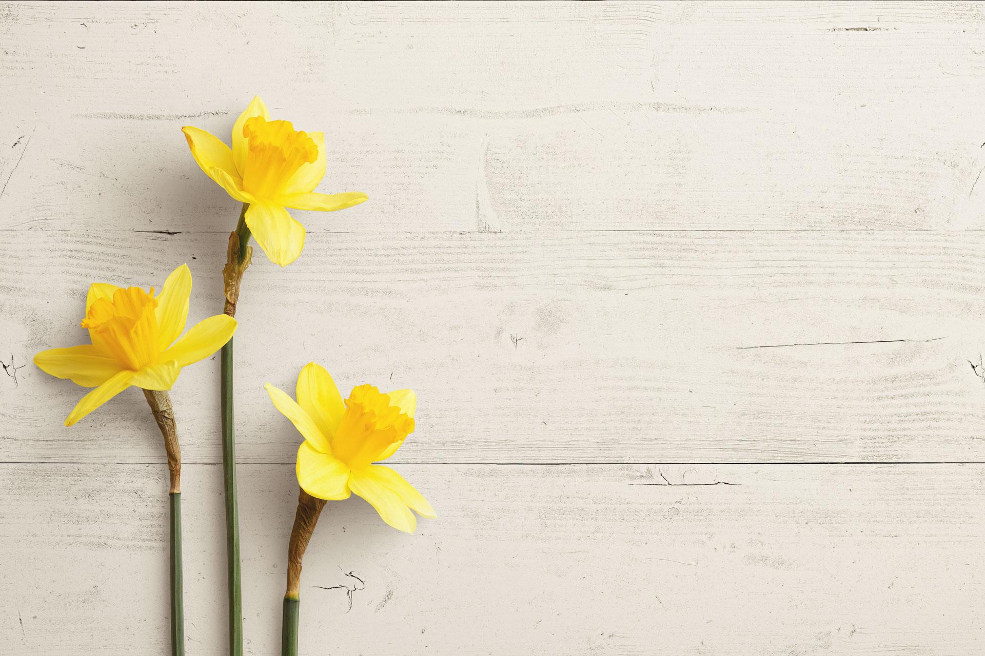 daffodils custom scene creator template 4 Thumbnail
