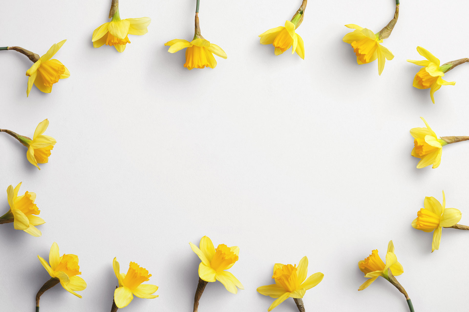 daffodils custom scene creator template 8 Thumbnail